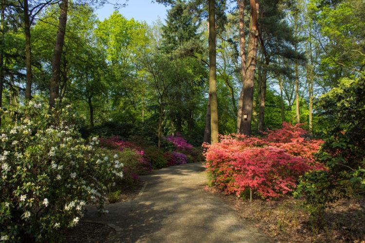 Рододендрон-парк - достопримечательности Бремена