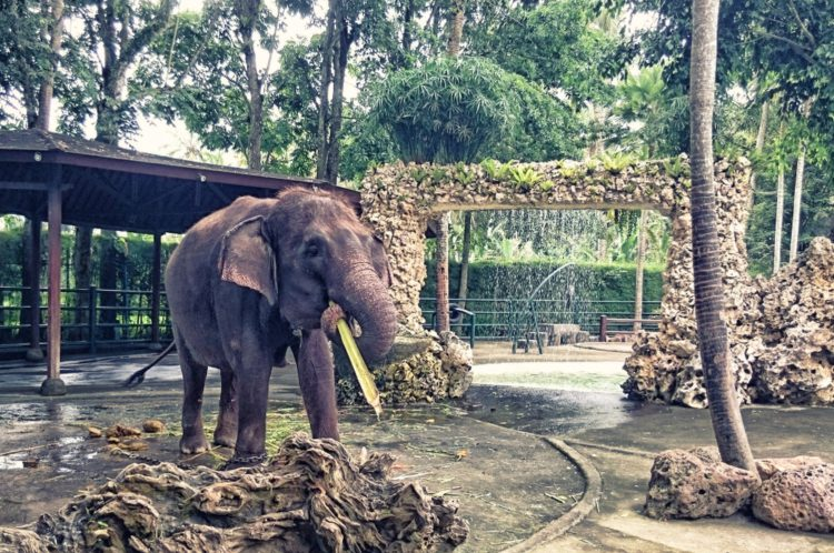 Парк слонов на Бали - достопримечательности Бали