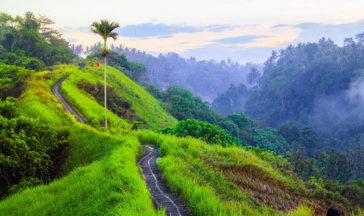 Тропа художников - Что посмотреть на Бали