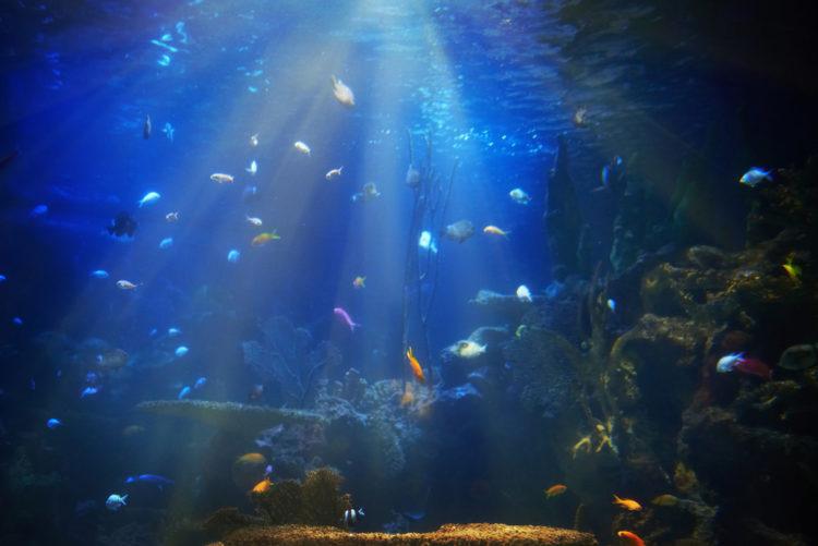 Ванкуверский аквариум - достопримечательности Ванкувера