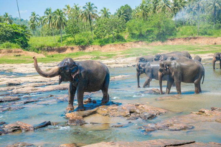 Национальный парк Яла - достопримечательности Шри-Ланки