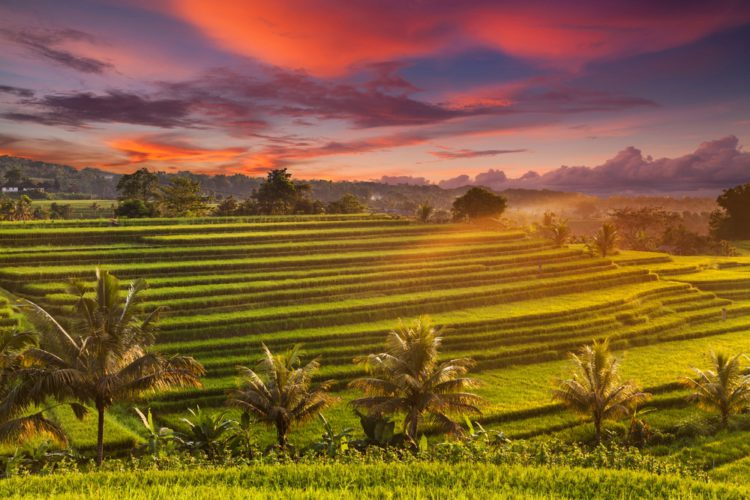 Рисовые террасы Джатилуви - достопримечательности Бали