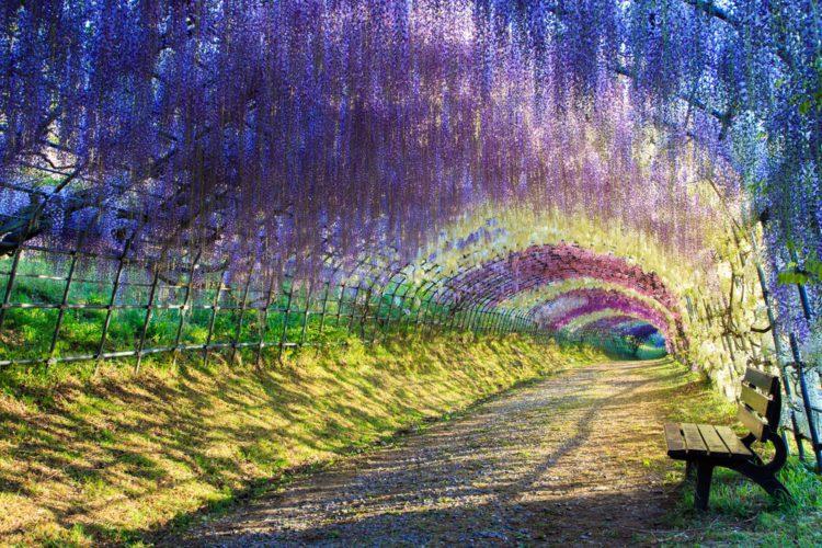 Самые красивые места планеты - сад Кавачи Фудзи, Япония