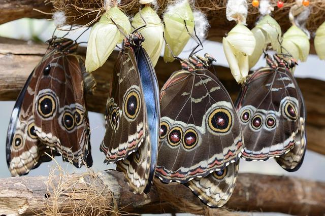 Парк Бабочек на о. Сентоза - достопримечательности Сингапура