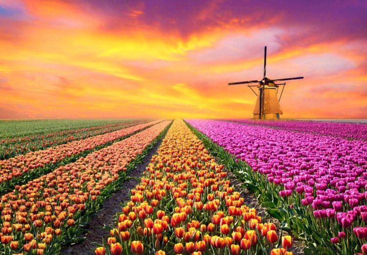 Самые красивые места планеты - поля тюльпанов в Нидерландах