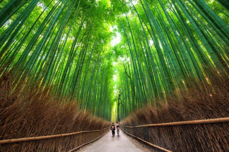 Самые красивые места мира - Бамбуковый лес, Япония
