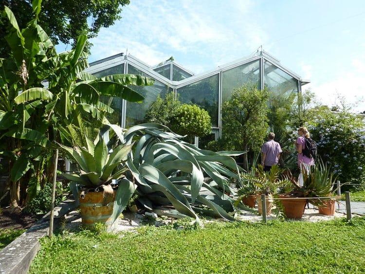 Ботанический сад Базельского университета - достопримечательности Базеля
