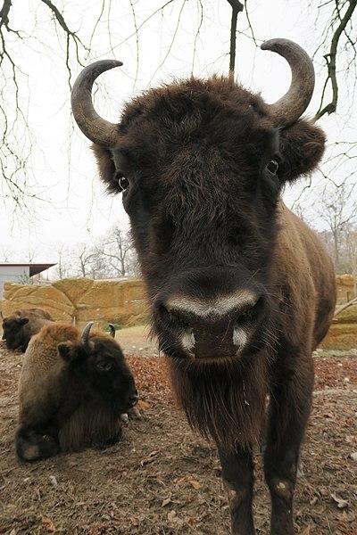 Зоопарк «Ланге Эрлен» - достопримечательности Базеля