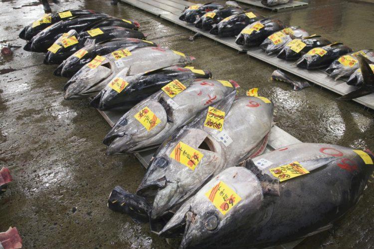 Рыбный рынок - достопримечательности Токио