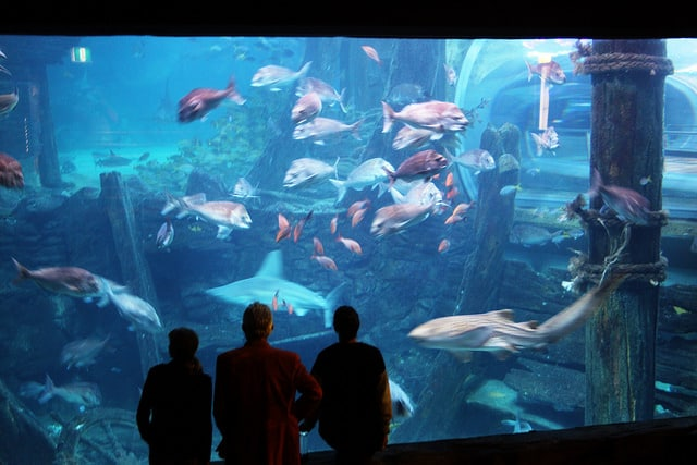 Мельбурнский аквариум - достопримечательности Мельбурна