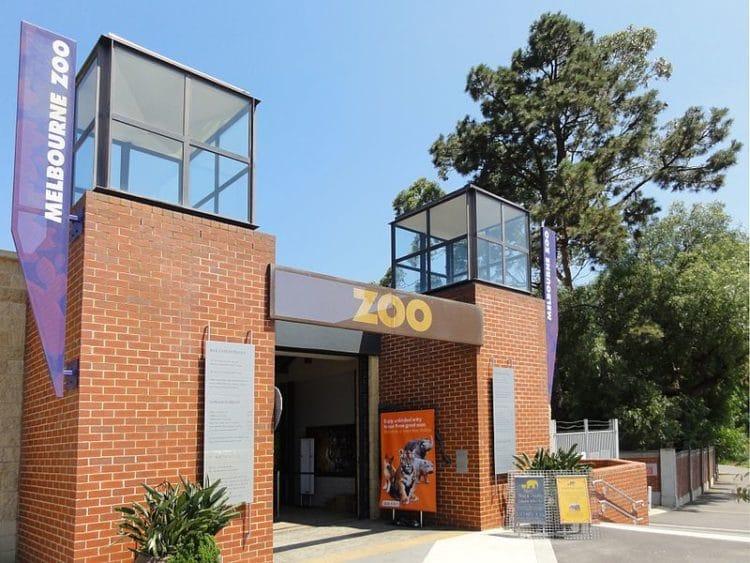 Мельбурнский зоопарк - достопримечательности Мельбурна