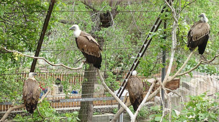 Ереванский зоопарк - достопримечательности Еревана
