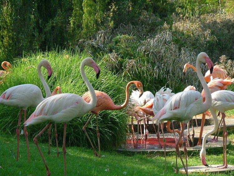 Иерусалимский библейский зоопарк - достопримечательности Иерусалима