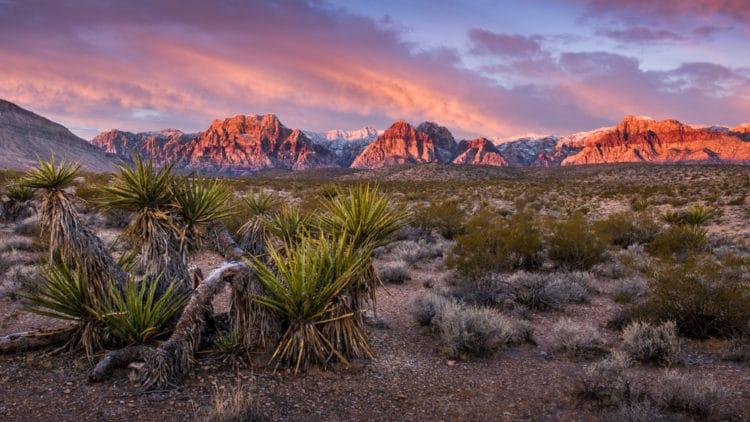 Ред-Рок-Каньон - Что посмотреть в Лас-Вегасе