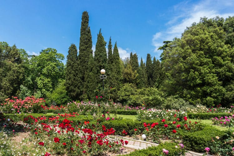 Никитинский ботанический сад - достопримечательности Ялты
