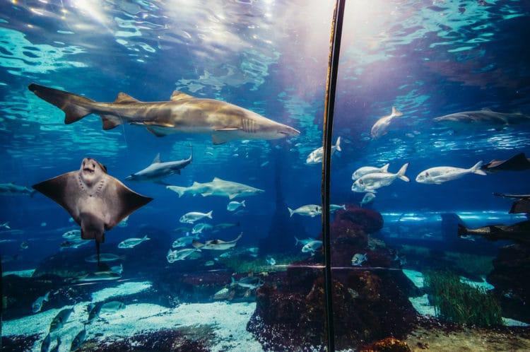 Океанариум и морской зоопарк - достопримечательности Хайнаня