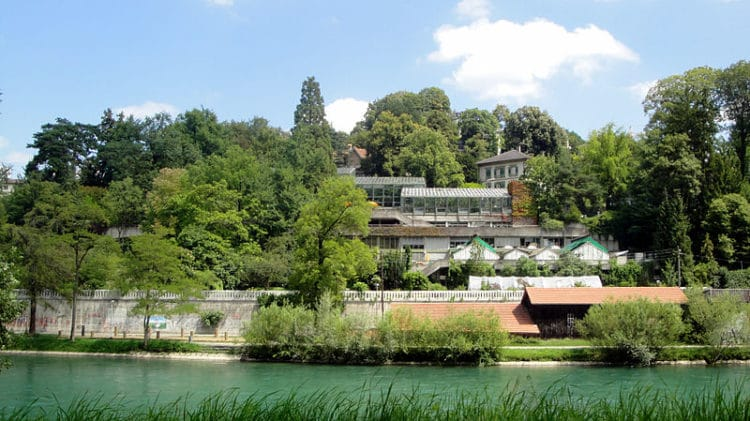 Ботанический сад - достопримечательности Берна