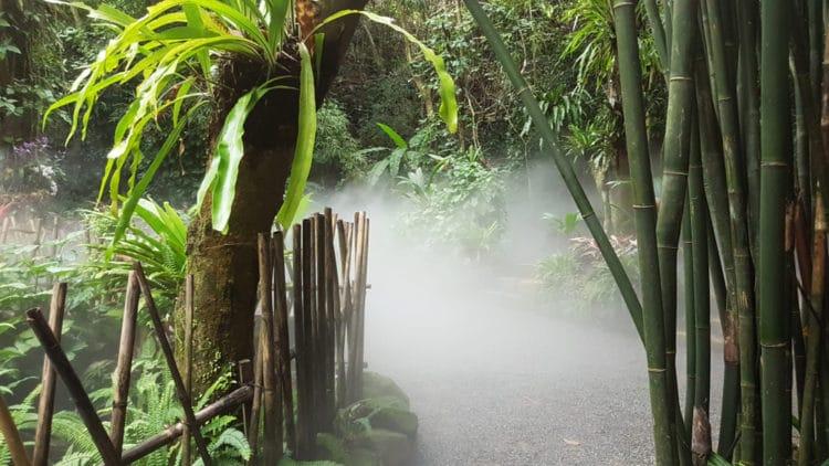 Тропический лес Янода - длстопримечательности Хайнаня