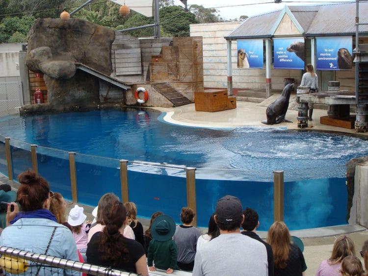 Зоопарк Таронга - достопримечательности Сиднея
