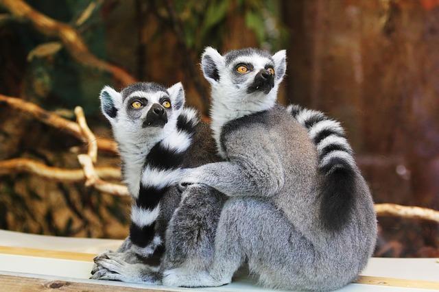 Зоопарк Лимпопо - достопримечательности Нижнего Новгорода
