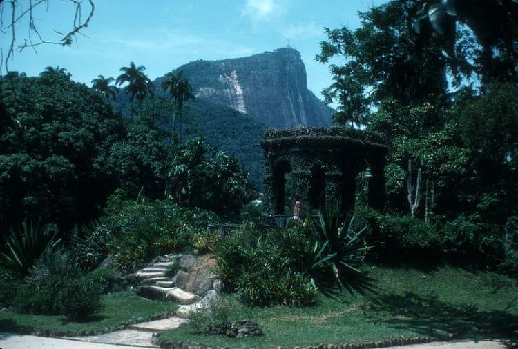 Ботанический сад Рио-де-Жанейро - достопримечательности Рио-де-Жанейро
