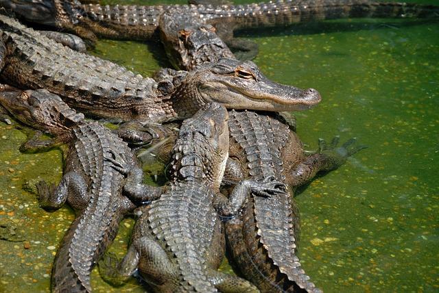 Ялтинский крокодиляриум - достопримечательности Ялты