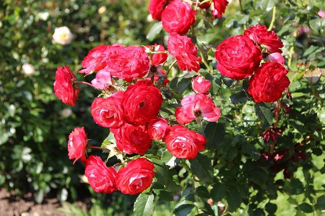 Университетский ботанический сад «Экопарк» - достопримечательности Варны