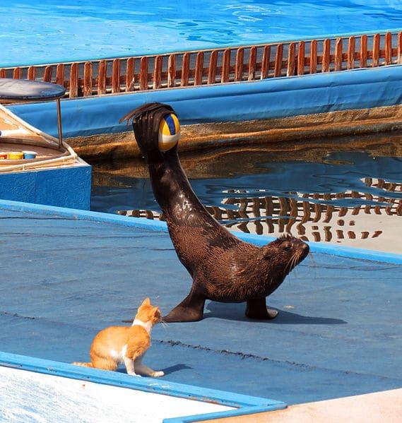 Дельфинарий в Севастополе - достопримечательности Севастополя