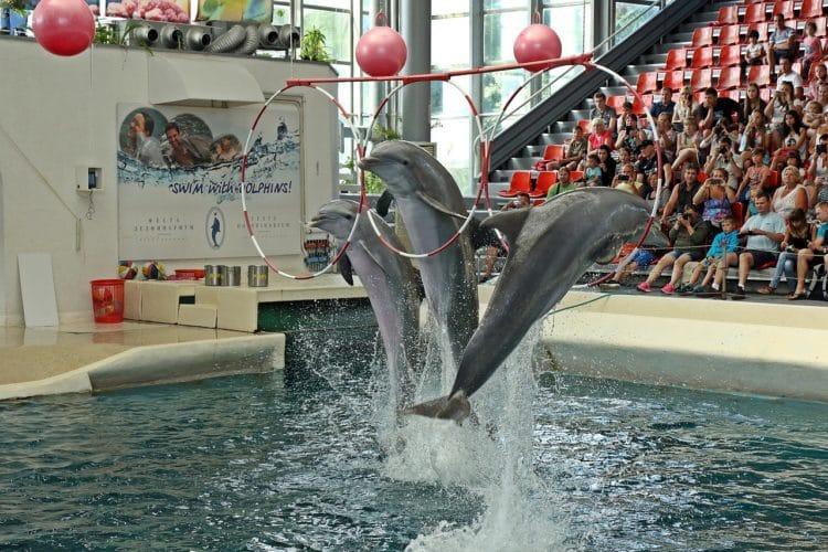 Дельфинарий - достопримечательности Варны
