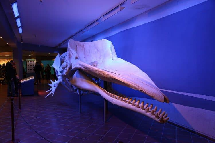 Аква-зоопарк и музей Löbbecke - достопримечательности Дюссельдорфа