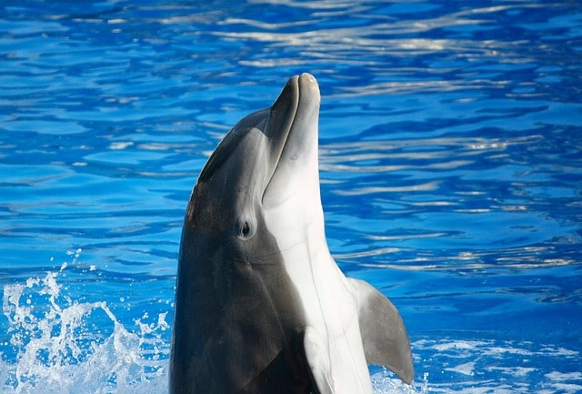 Ярославский дельфинарий - достопримечательности Ярославля