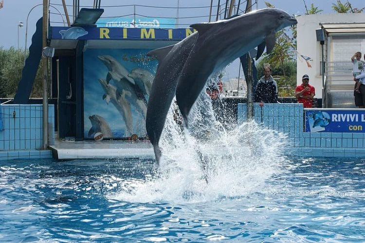 Дельфинарий - достопримечательности Римини