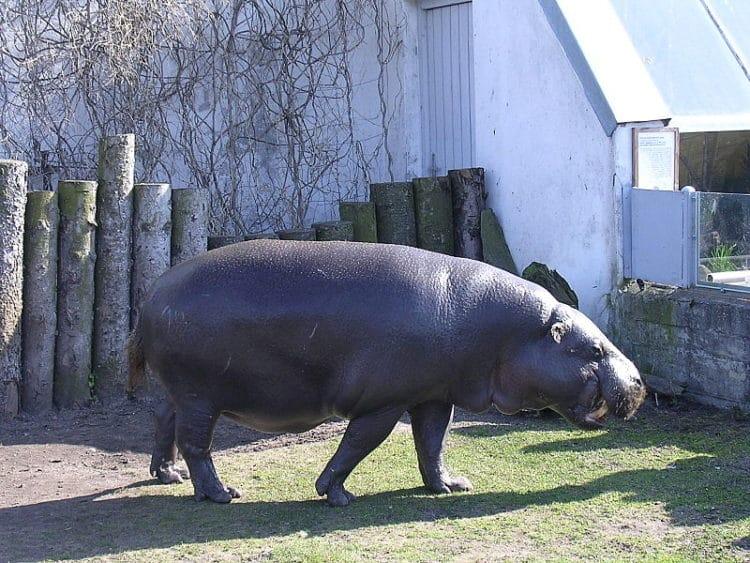 Таллинский зоопарк - достопримечательности Таллина