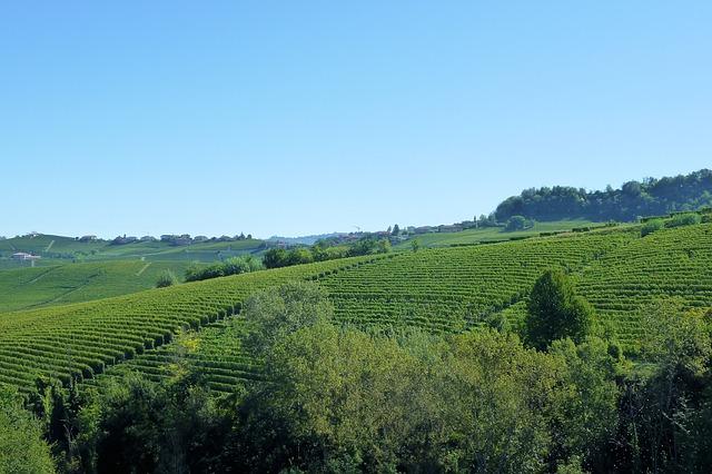 Винодельня Tenuta del Monsignore - Что посмотреть в Римини