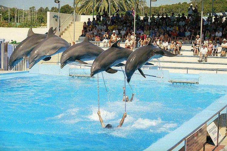 Дельфинарий «Маринеленд» - достопримечательности Майорки
