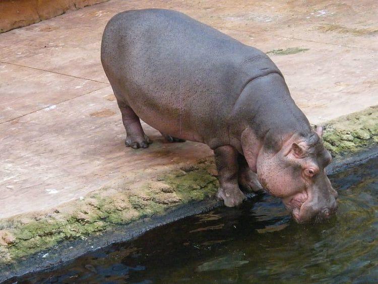 Зоопарк и Африкариум- достопримечательности Вроцлава