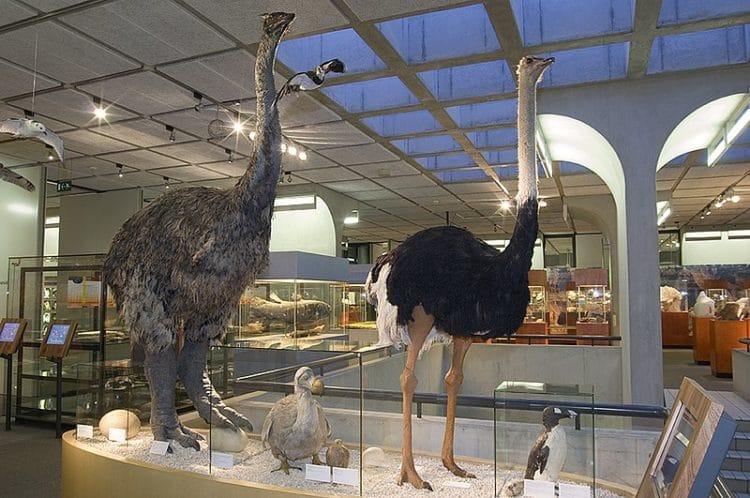 Музей Музеон - достопримечательности Гааги