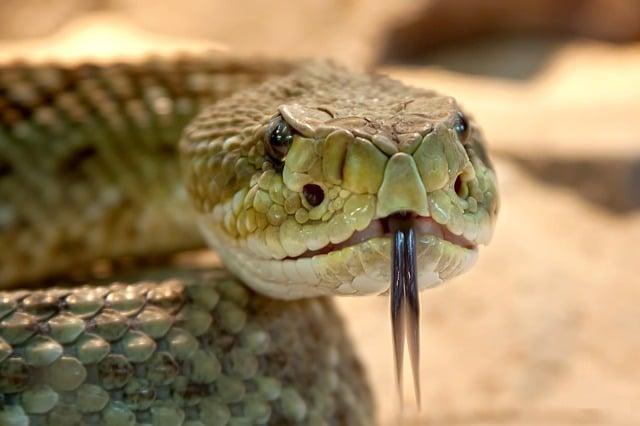 Змеиная деревня Ле Мат - достопримечательности Ханоя