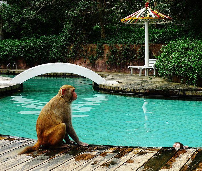 Остров обезьян - достопримечательности Хайнаня