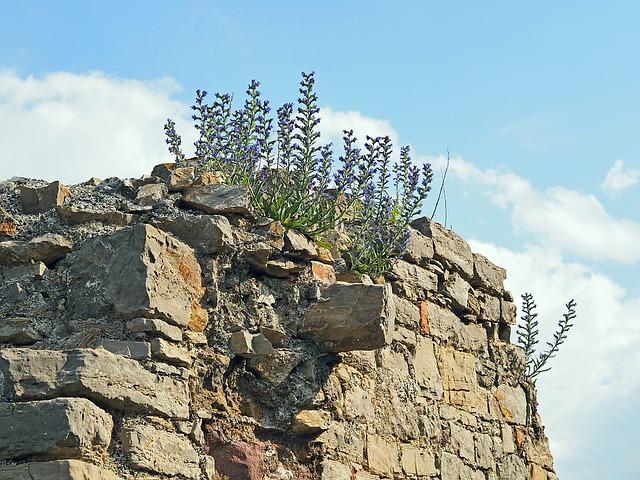 Крепость Абаата - достопримечательности Гагры