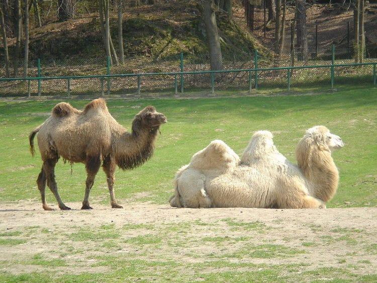 Зоопарк - достопримечательности Гданьска