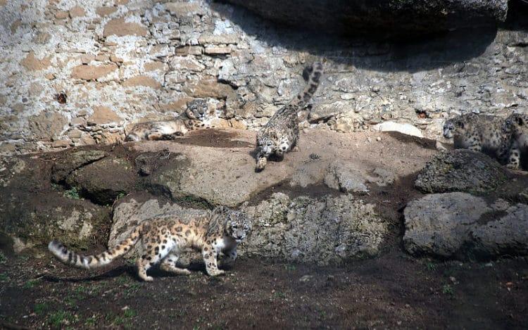 Зальцбургский зоопарк - достопримечательности Зальцбурга