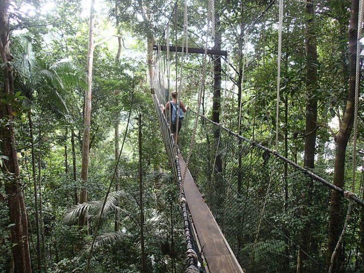 Национальный парк Таман Негара в Малайзии