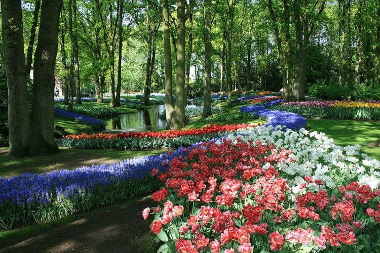 Кекенхоф в Нидерландах