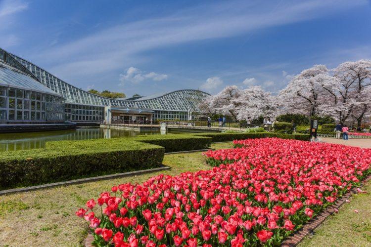 Киотский ботанический сад в Японии