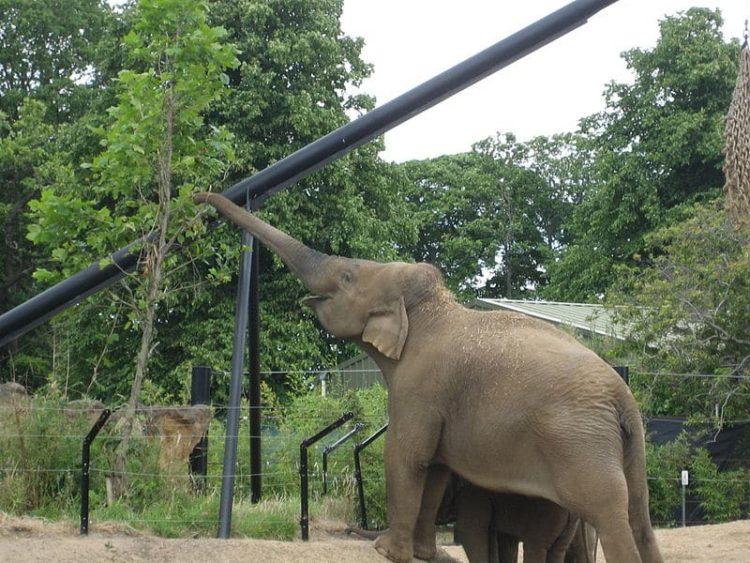 Дублинский зоопарк в Ирландии