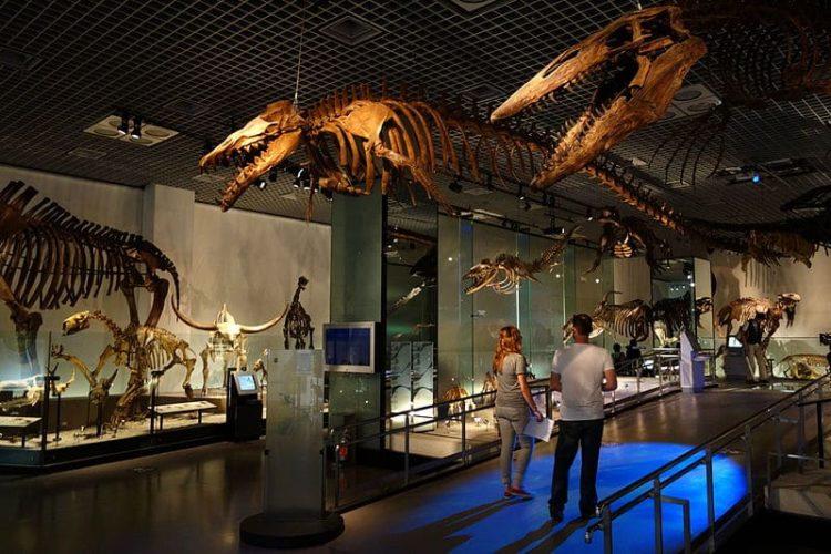 Национальный музей природы и науки в Японии