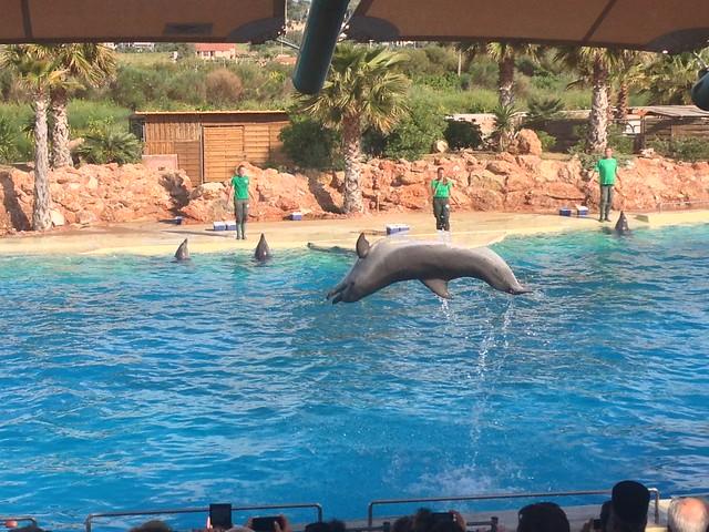 Зоопарк Аттика в Греции