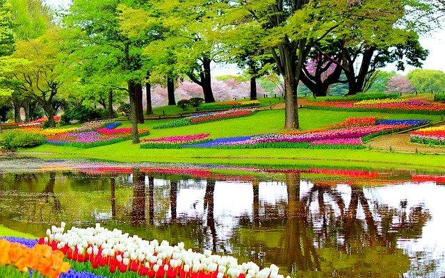 Парк цветов Кёкенхоф - достопримечательности Нидерландов