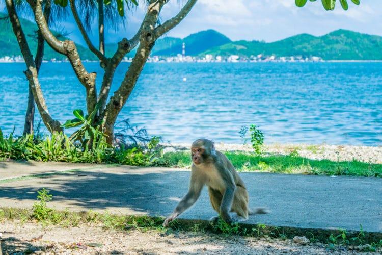 Остров обезьян - достопримечательности Нячанга